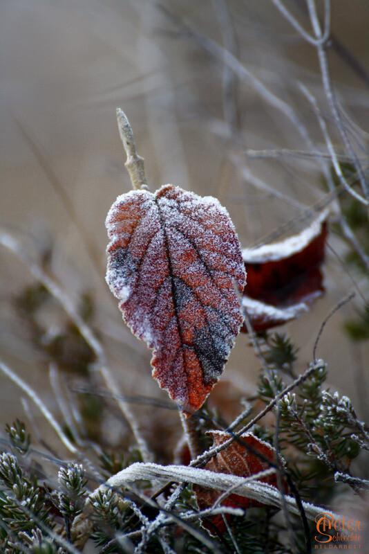 Vereistes Blatt, ein Überbleibsel vom Herbst.