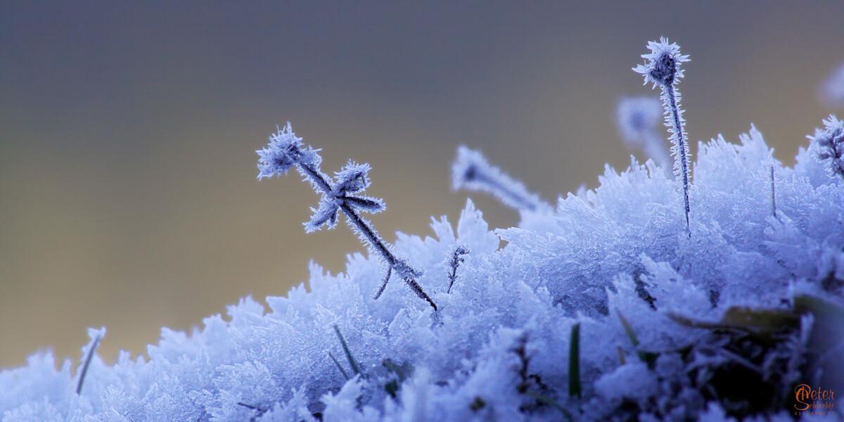 FROZEN LILA aus der Jachenau bei -15 Grad Celsius.