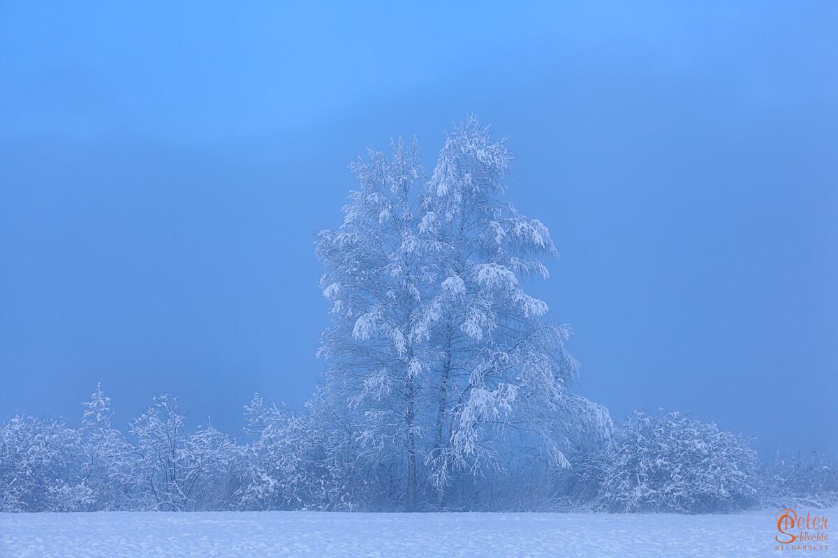 Eiskalter Morgen im Schlehdorfer Moor.