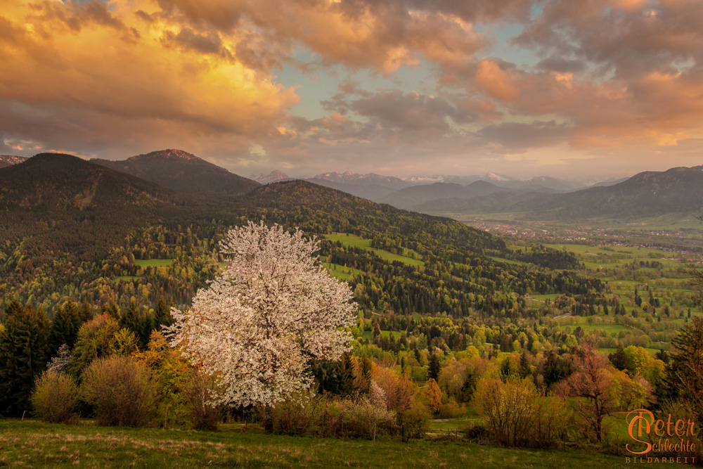 Das Isartal im Frühling mit blühenden Kirschbaum von der Sundtraten aus.