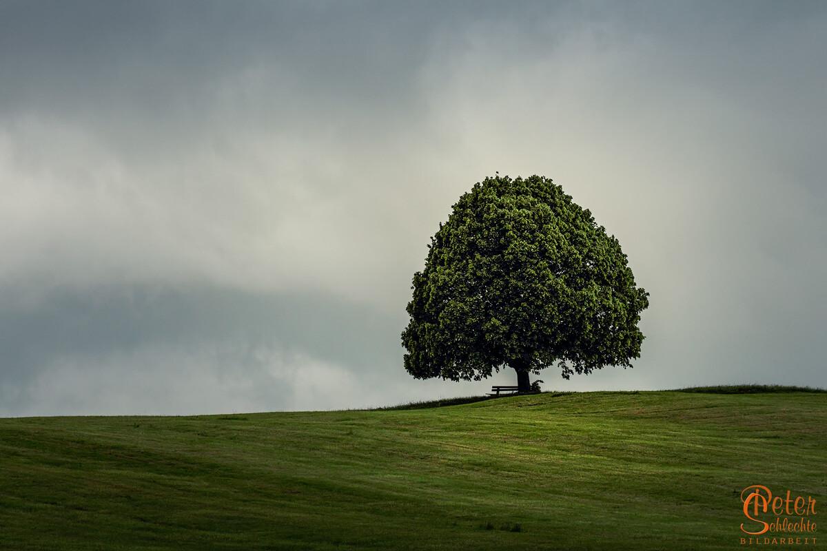 Einzelstehender Baum mit Parkbank in Kulturlandschaft.