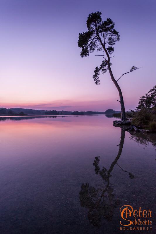 Ostersee Abenddämmerung mit einzelnem Baum gespiegelt im See.