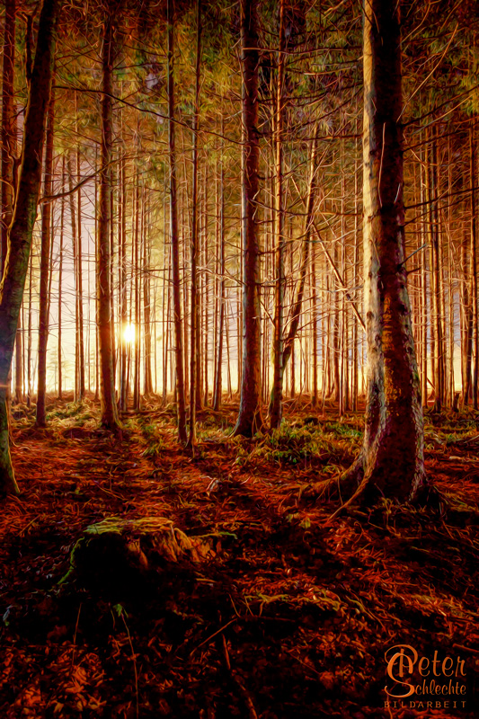 Im Wald in der Nacht bei Holzkirchen.