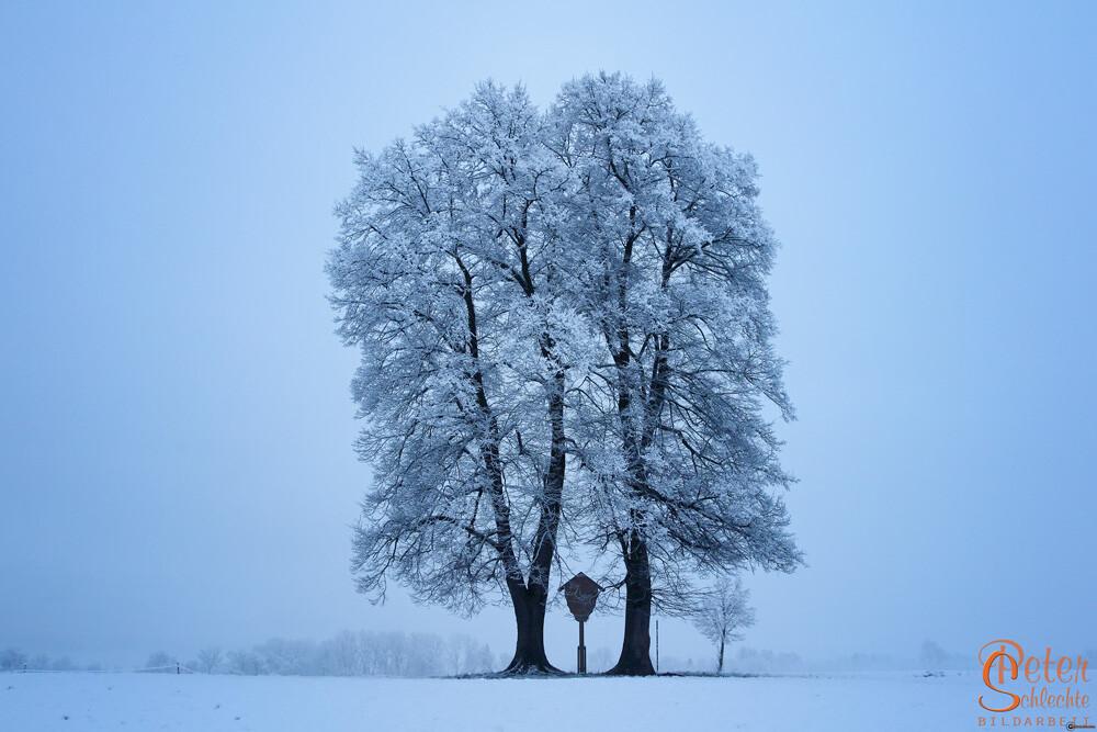 Winterweiße Bäume mit Wegekreuz in der Nähe von Großweil.