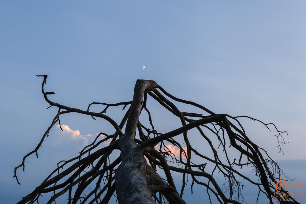 Äste eines abgestorbenen Baumes in der Abenddämmerung.