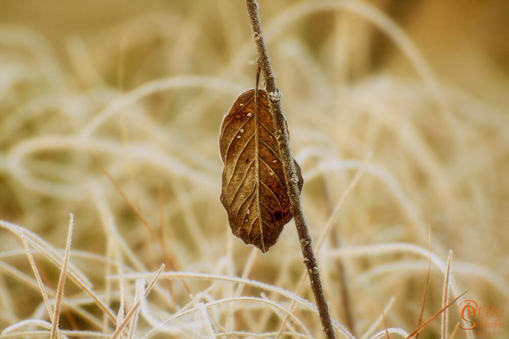 Gefrorenes Herbstblatt.