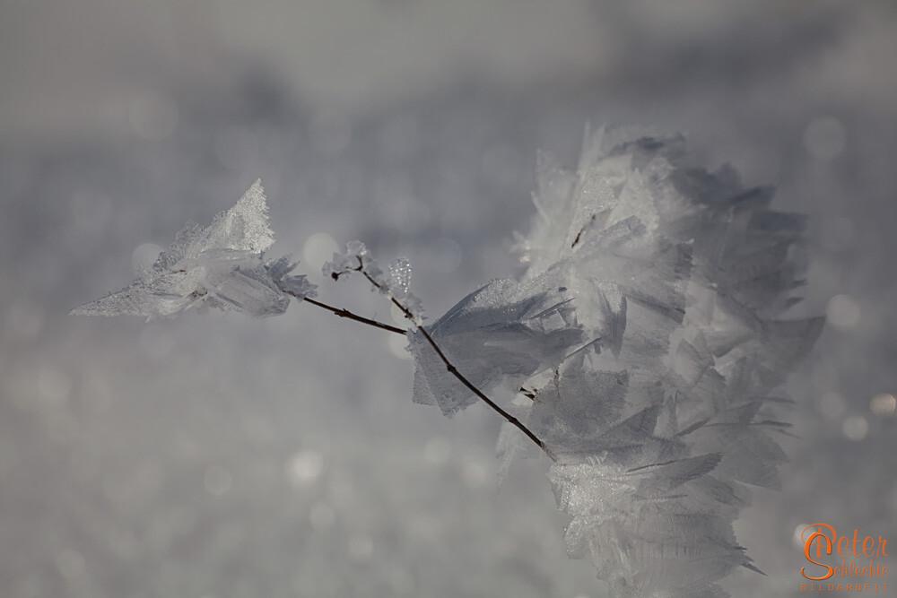 Ein Roadrunner aus Reif und Wind geformt.