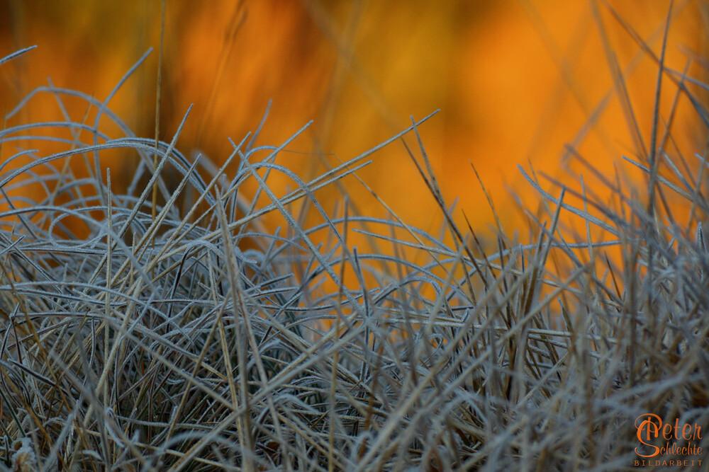 Gefrorenes Gras vor einem sonnenbeschienen Berghang morgens im Winter.