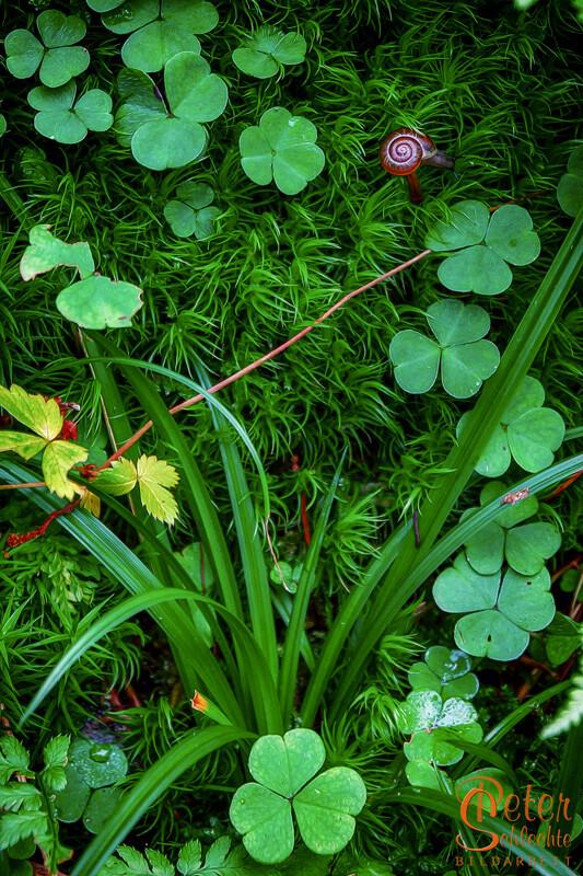 Grünes Allerlei im Wald.