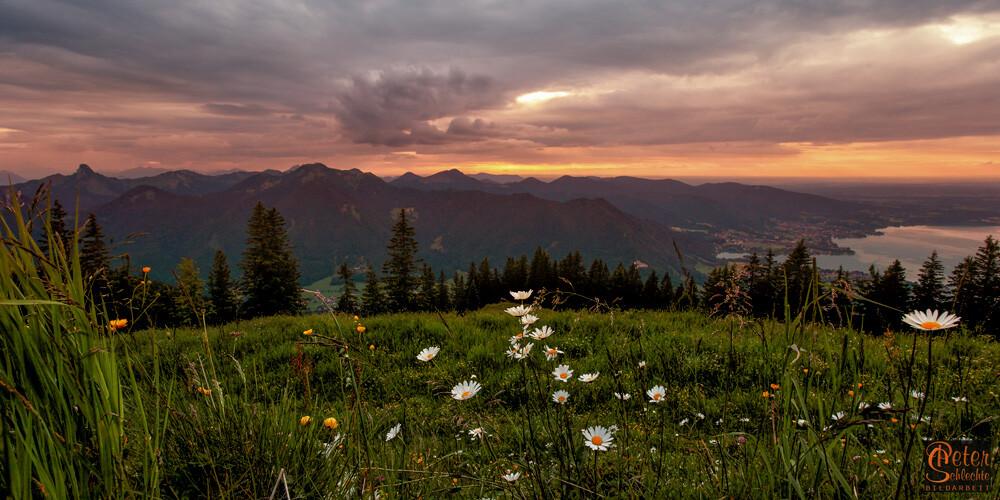 Blumen auf dem Wallberg zur Abenddämmerung. Rechts der Tegernsee teilweise.