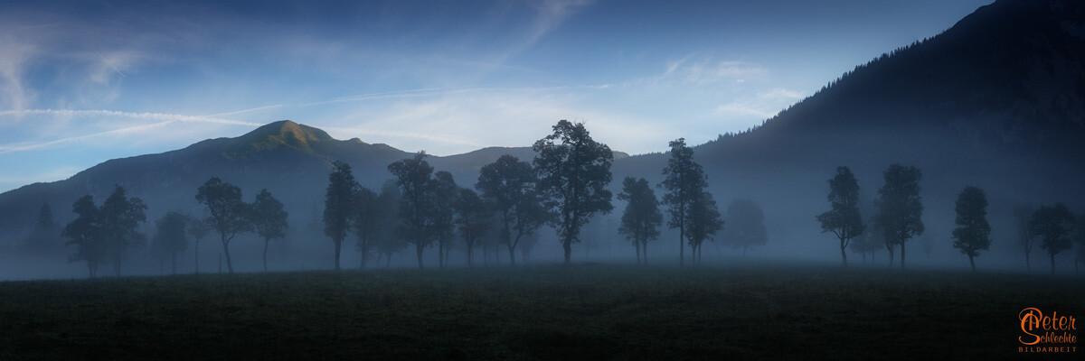 Alte Ahornbäume im Enger Grund im morgendlichen Nebel.